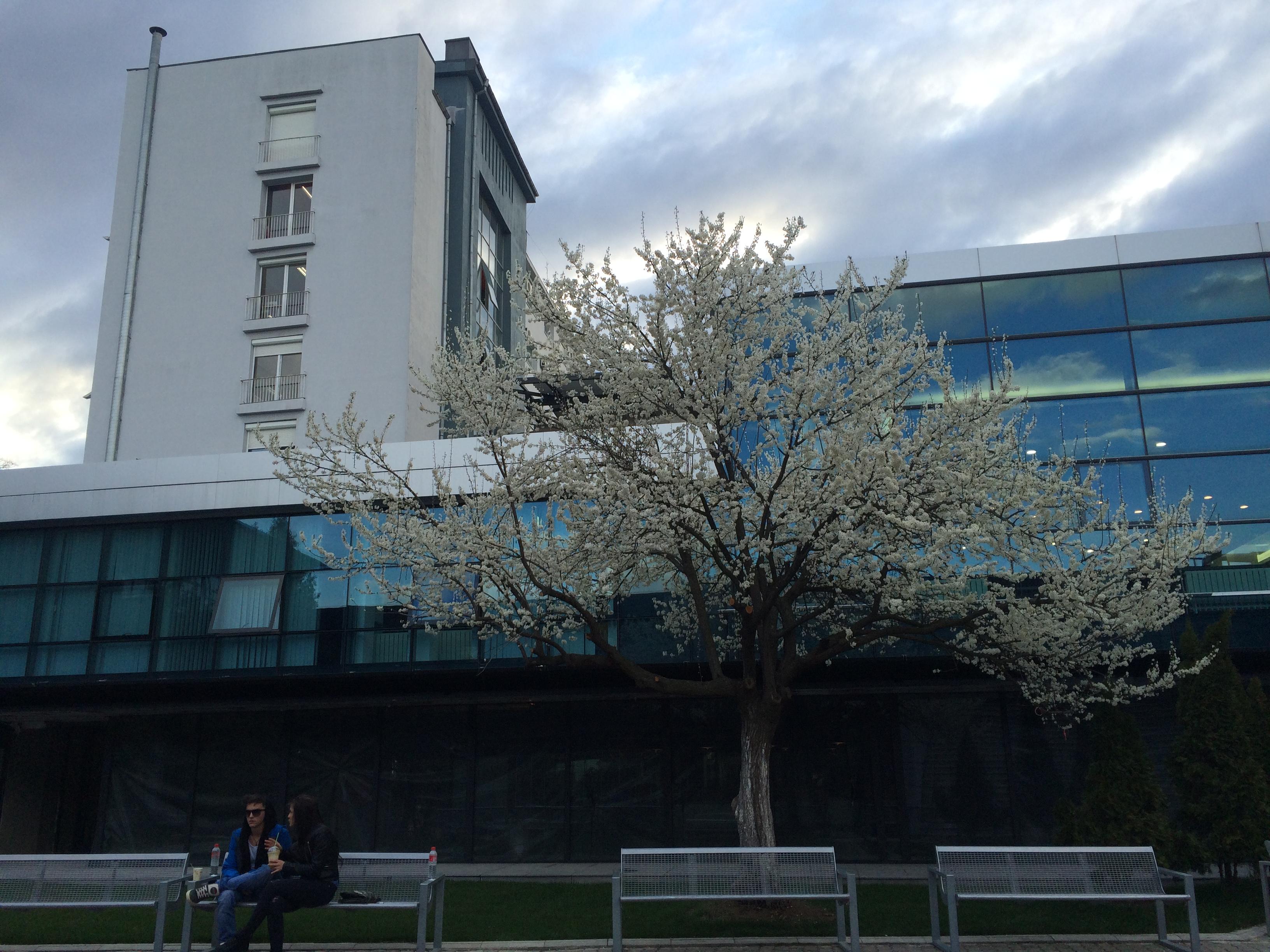 New Bulgarian University, Department of Music